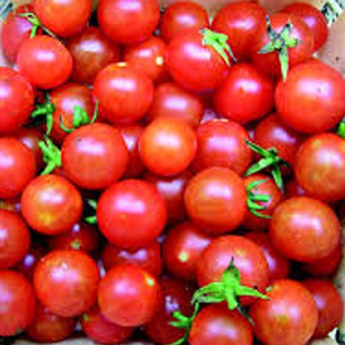 Fay Mountain Farm Candyland Cherry Tomatoes