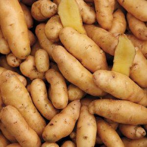 Ward's Berry Farm Fingerling Potatoes